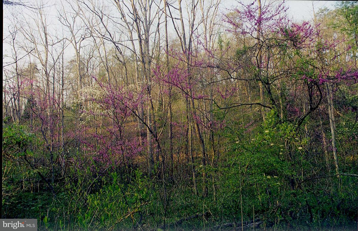 Additional photo for property listing at Oak St  Stephens City, Virginia 22630 United States