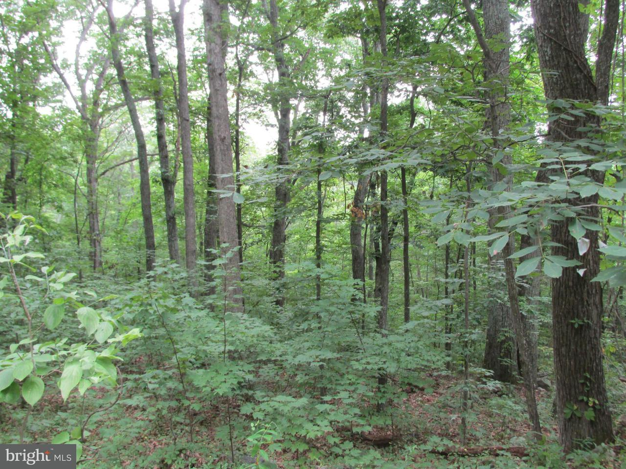 Land for Sale at Cardinal Dr Luray, Virginia 22835 United States