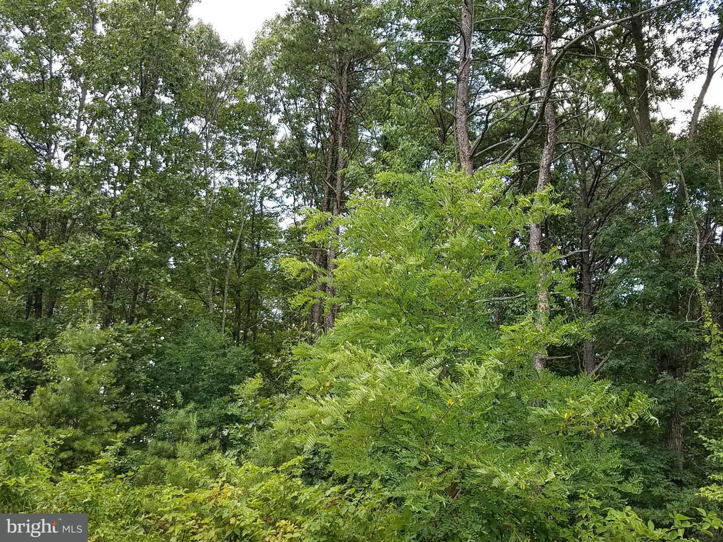Land for Sale at 10 Silage Ln Berkeley Springs, West Virginia 25411 United States