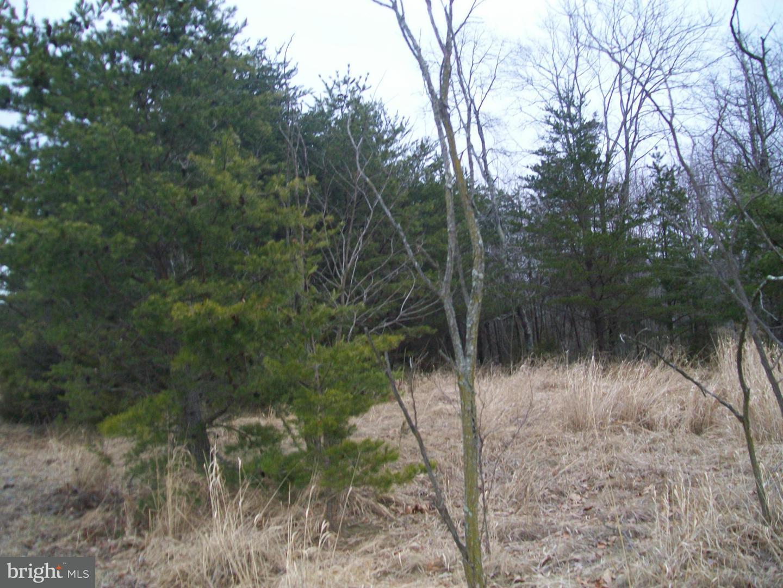 Land for Sale at Proctor Rd Purgitsville, West Virginia 26852 United States