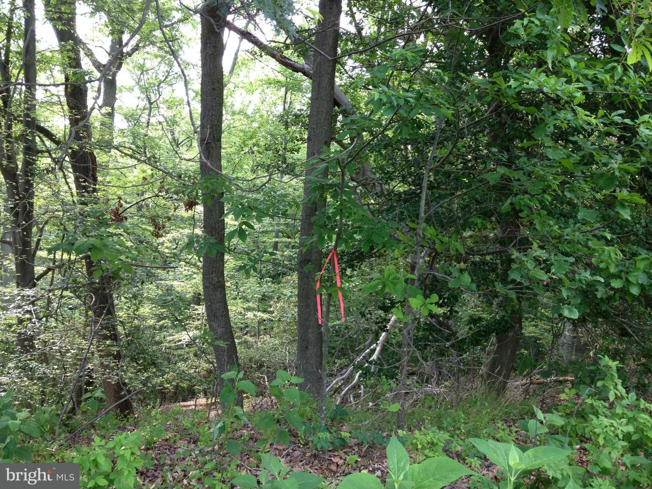 Additional photo for property listing at Not On File  Montross, Virginia 22520 United States