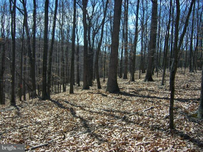Land for Sale at Dumpling Run Rd Moorefield, West Virginia 26836 United States