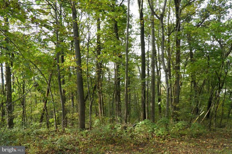 Land for Sale at 0 High Top Rd Linden, Virginia 22642 United States