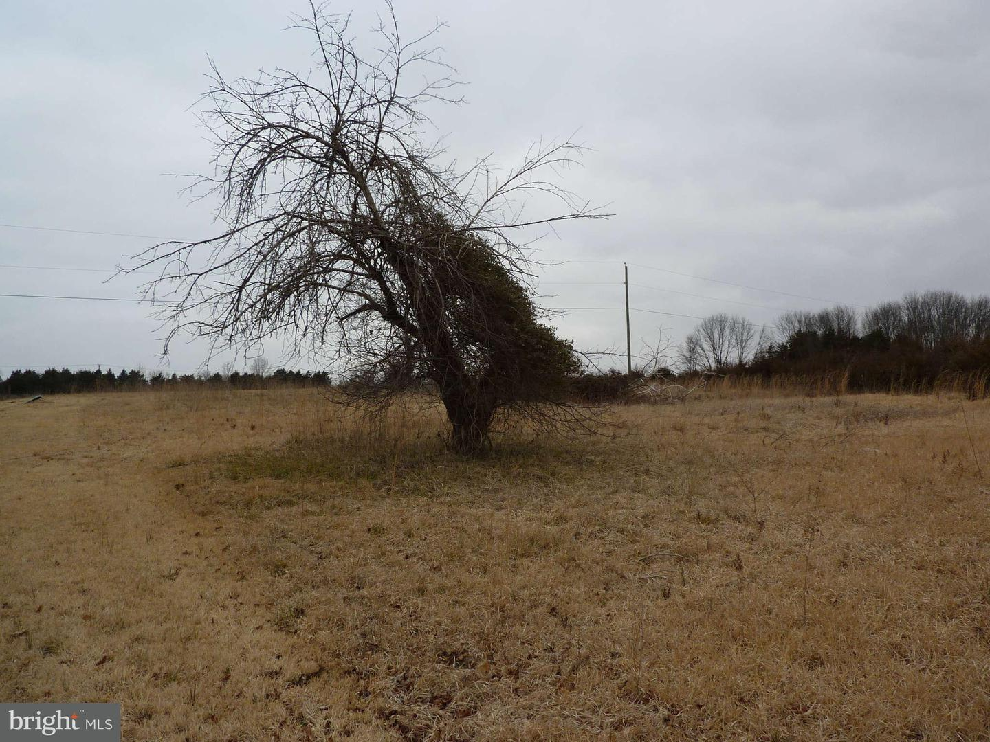 Land for Sale at Shipp St New Market, Virginia 22844 United States