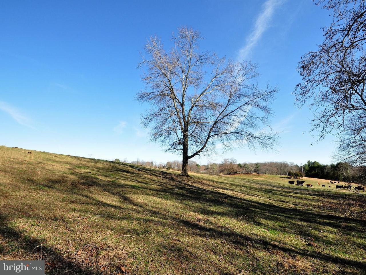 Land for Sale at Scrabble Castleton, Virginia 22716 United States