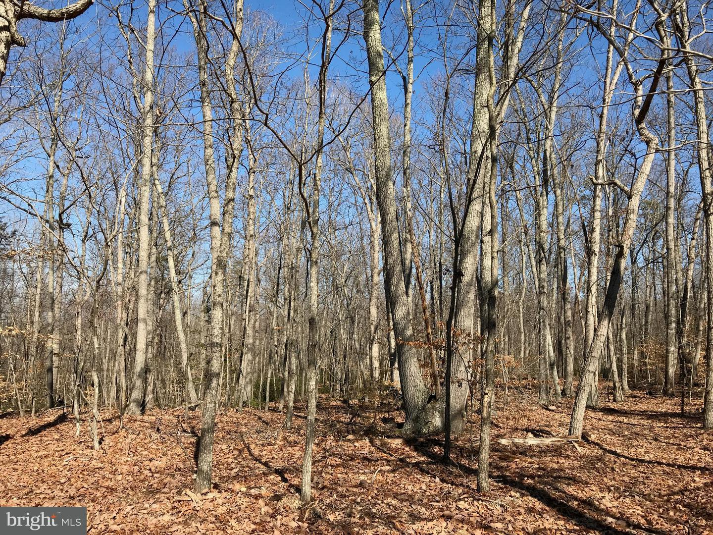 Land for Sale at Unknown Elkwood, Virginia 22718 United States
