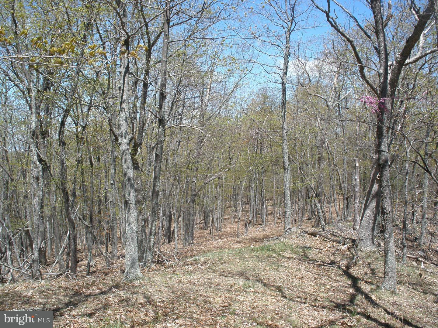 Additional photo for property listing at Dumpling Run Rd  Moorefield, West Virginia 26836 United States