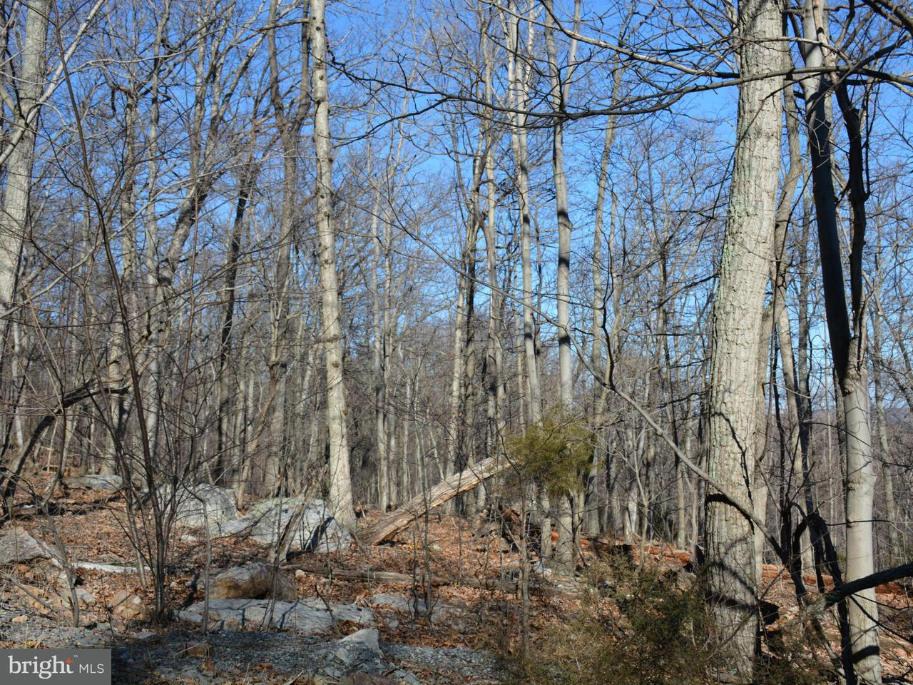 Additional photo for property listing at Fall Run Lane  Winchester, Virginia 22602 United States