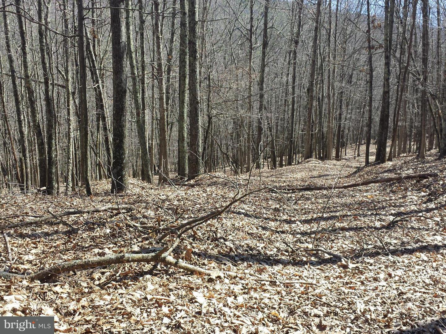 Land for Sale at South Fork Mountain Upper Tract, West Virginia 26866 United States