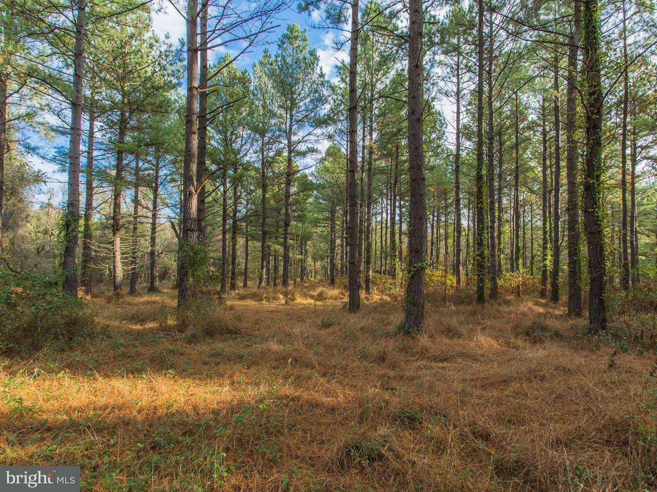 Land for Sale at John Marshall Hwy The Plains, Virginia 20198 United States