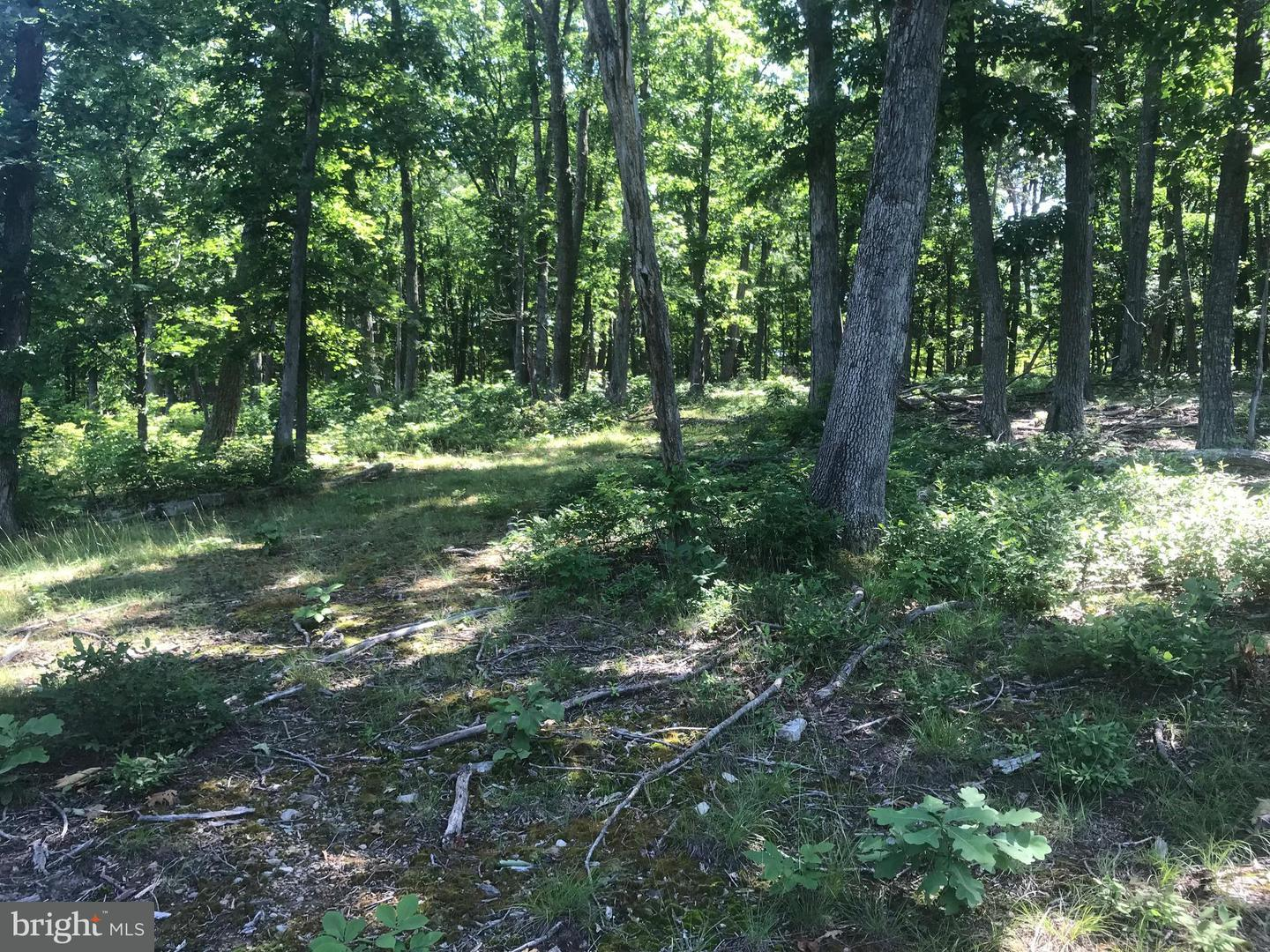 Land for Sale at Lemming Ln Star Tannery, Virginia 22654 United States