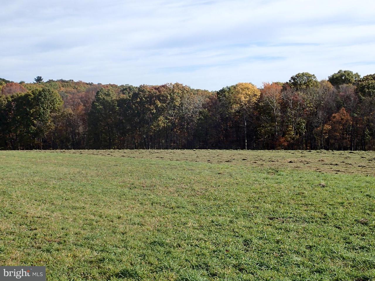 Land for Sale at Piney Ridge Road Not On File Huntingdon, Pennsylvania 16652 United States