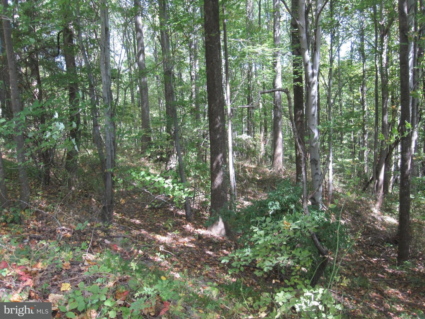Land for Sale at Leathers Ln Etlan, Virginia 22719 United States