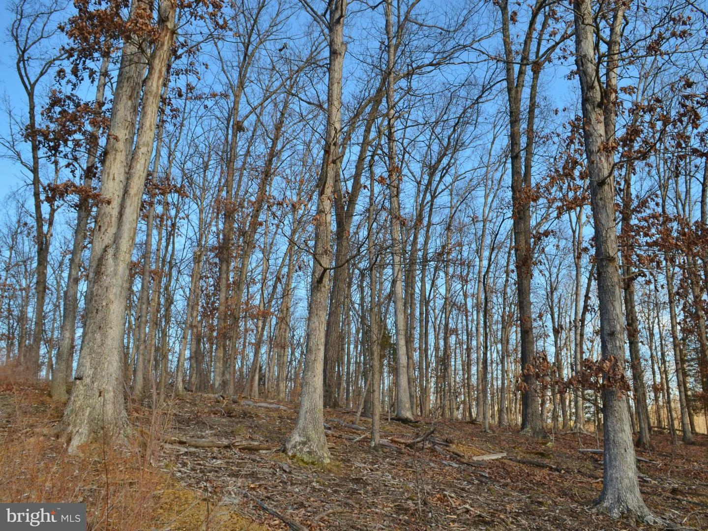 Additional photo for property listing at Lot 29 Comforter Ln  Middletown, Virginia 22645 United States