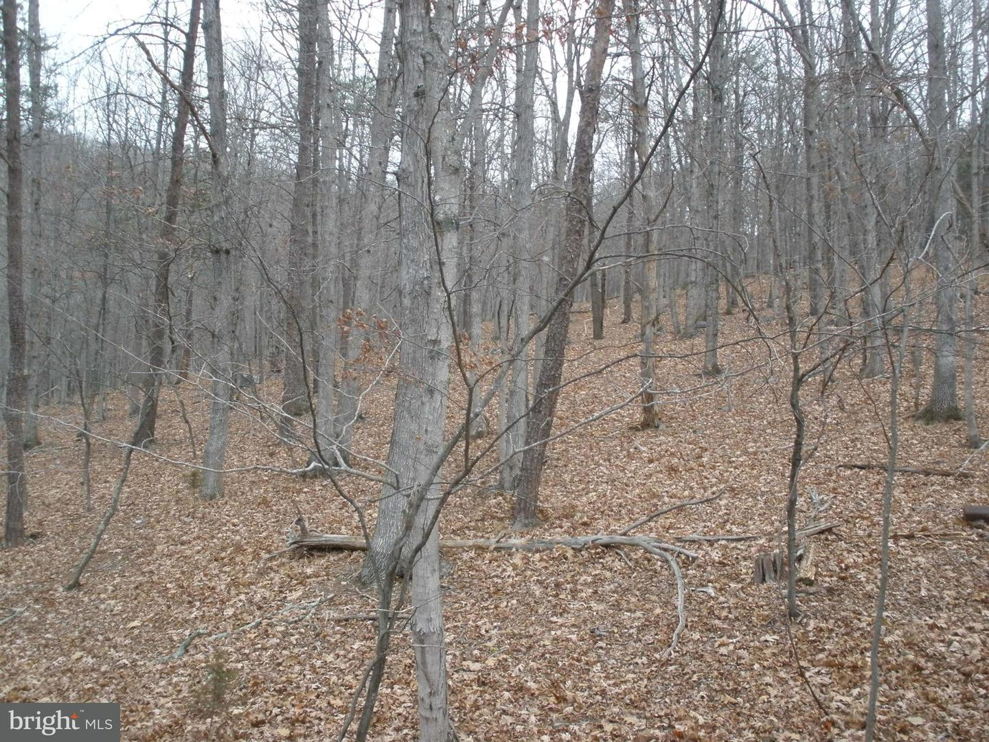 Additional photo for property listing at Off Route 220  Old Fields, West Virginia 26845 United States