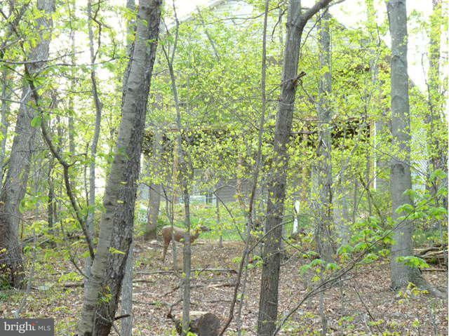 Land for Sale at Lot 69 Willow Ln Basye, Virginia 22810 United States
