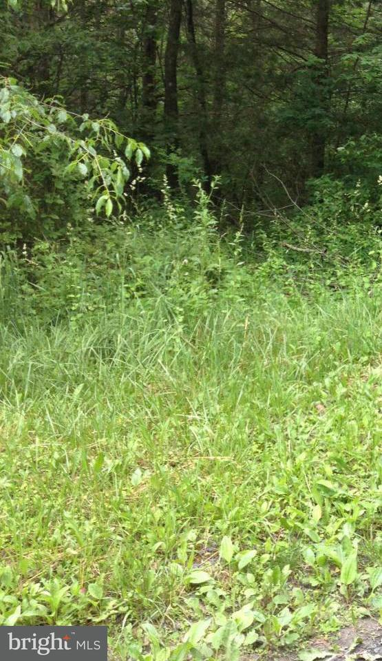 Land for Sale at 0 Sandpiper Dr Basye, Virginia 22810 United States