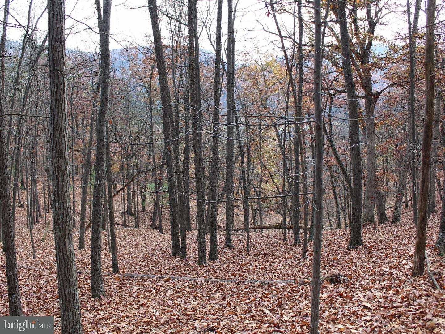 Land for Sale at 60 Acs White Oak Dr Upper Tract, West Virginia 26866 United States