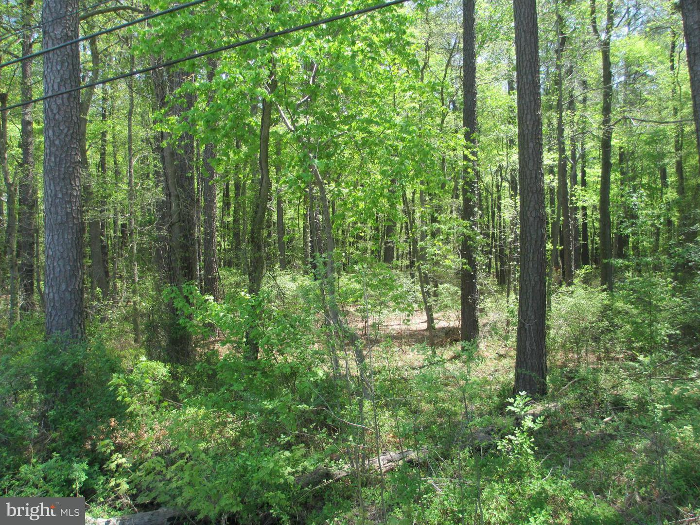Additional photo for property listing at 0 East Sharp St. And Rt. 20  Rock Hall, Maryland 21661 United States