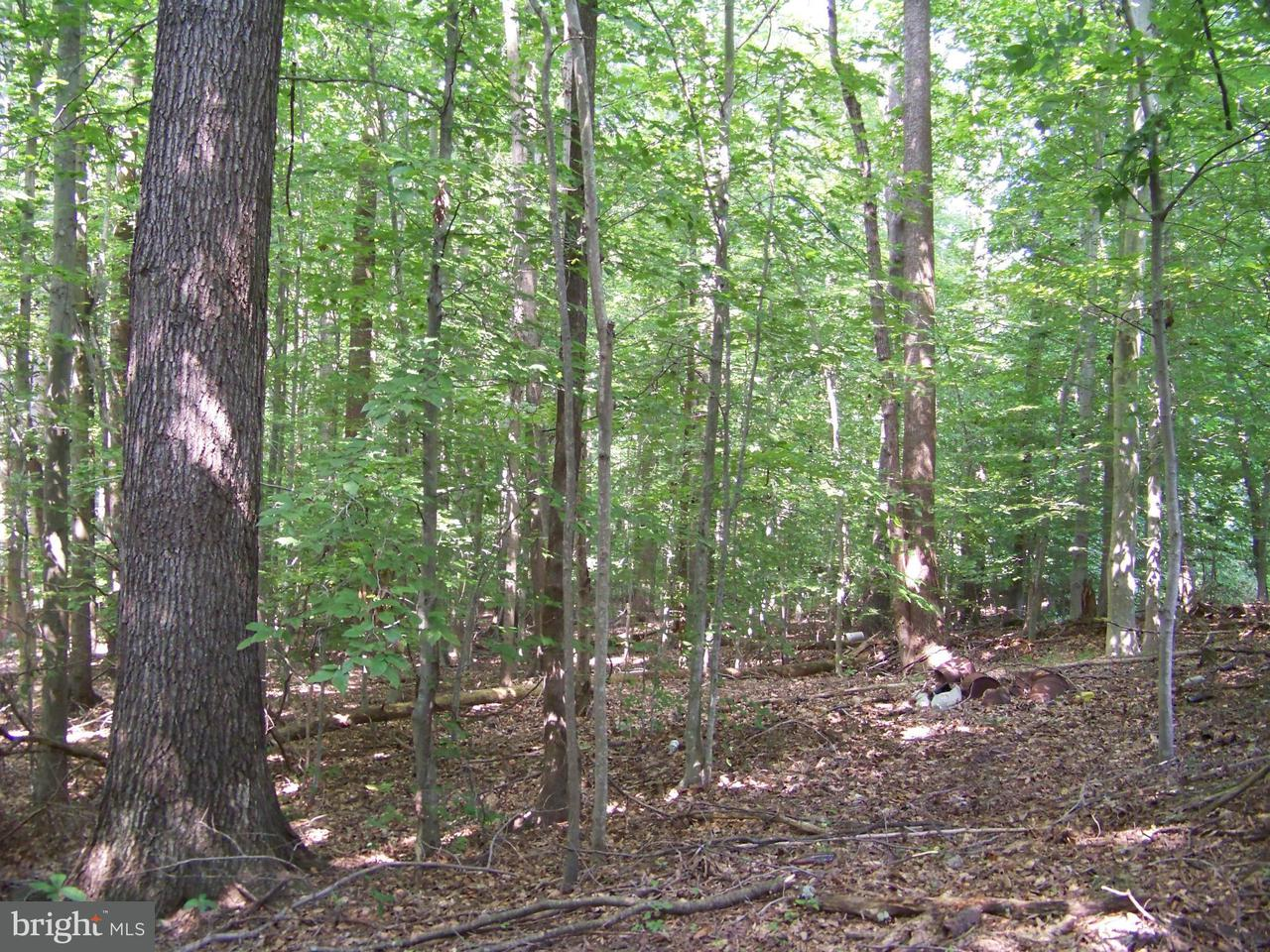 Additional photo for property listing at 349 Whitetail Drive 349 Whitetail Drive Dunkirk, Maryland 20754 Estados Unidos