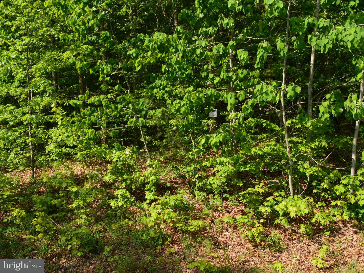 Land for Sale at 85 Beechwood Rd Keyser, West Virginia 26726 United States