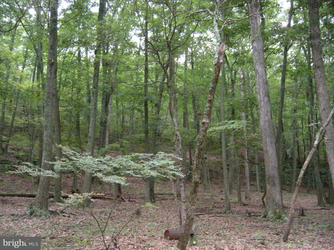 Land for Sale at 15lot # Hoover Young Dr Capon Bridge, West Virginia 26711 United States