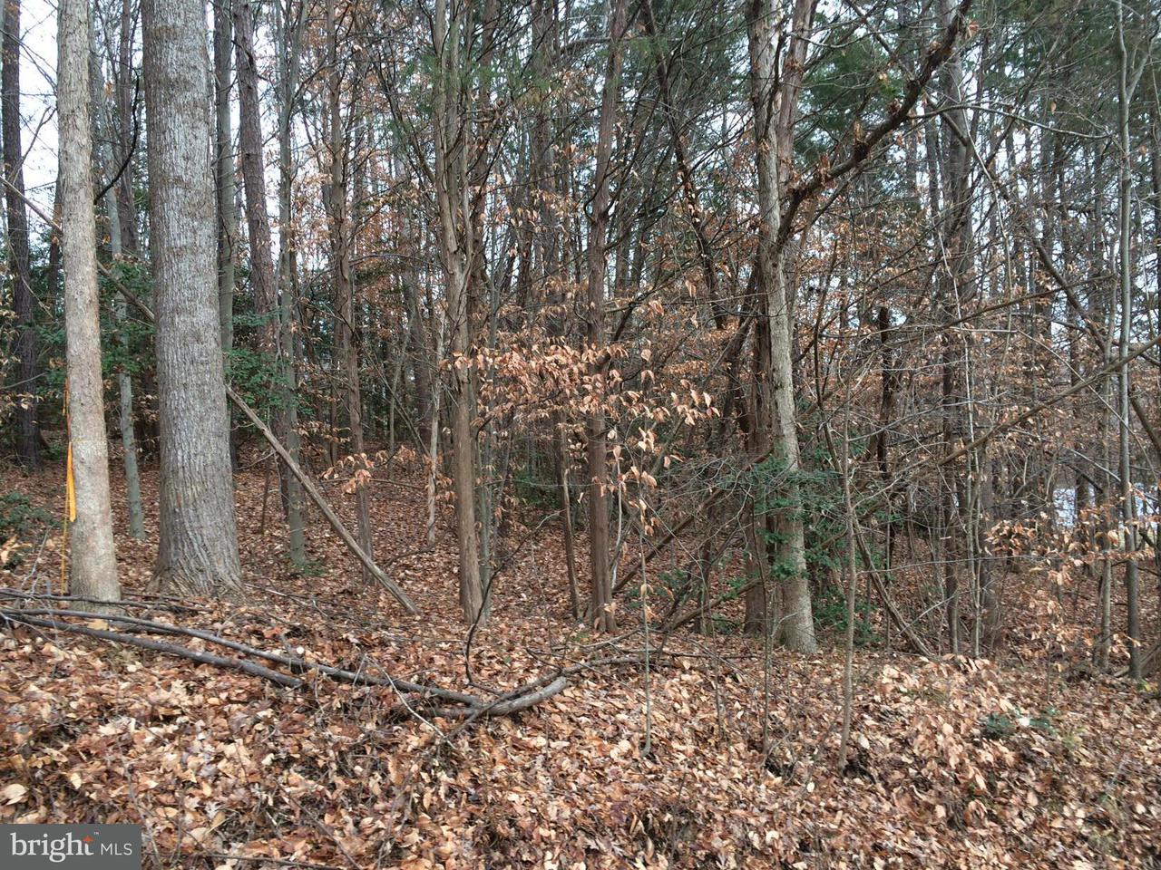 Additional photo for property listing at Country Club Ln  Ruther Glen, Virginia 22546 United States