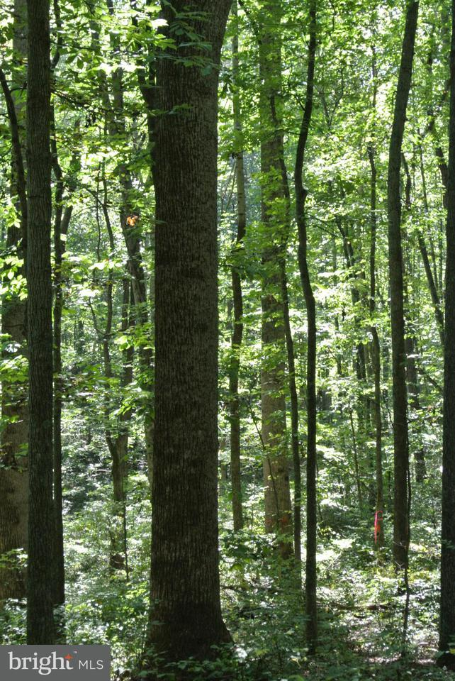 Additional photo for property listing at Weaver  Amissville, Virginia 20106 United States