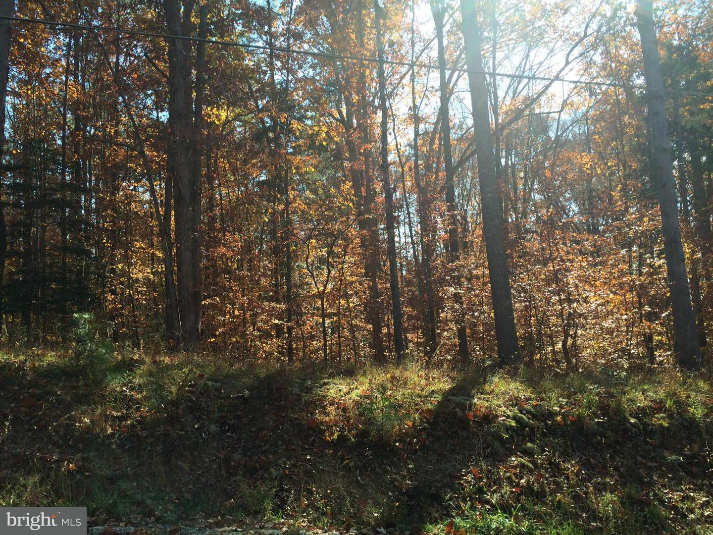 Additional photo for property listing at Shortleaf  Ruther Glen, Virginia 22546 United States