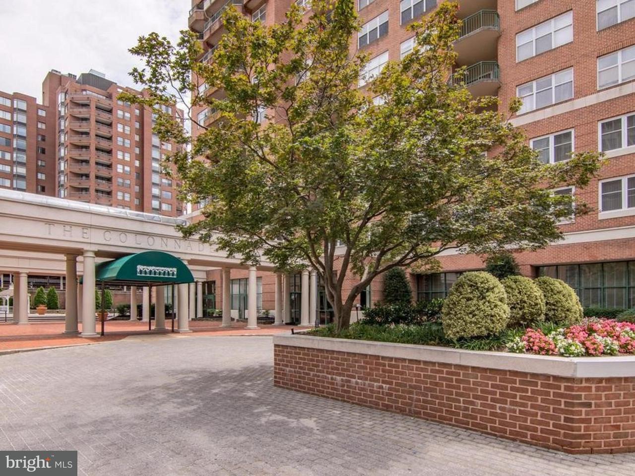 Condominium for Rent at 3801 Canterbury Rd #707 Baltimore, Maryland 21218 United States