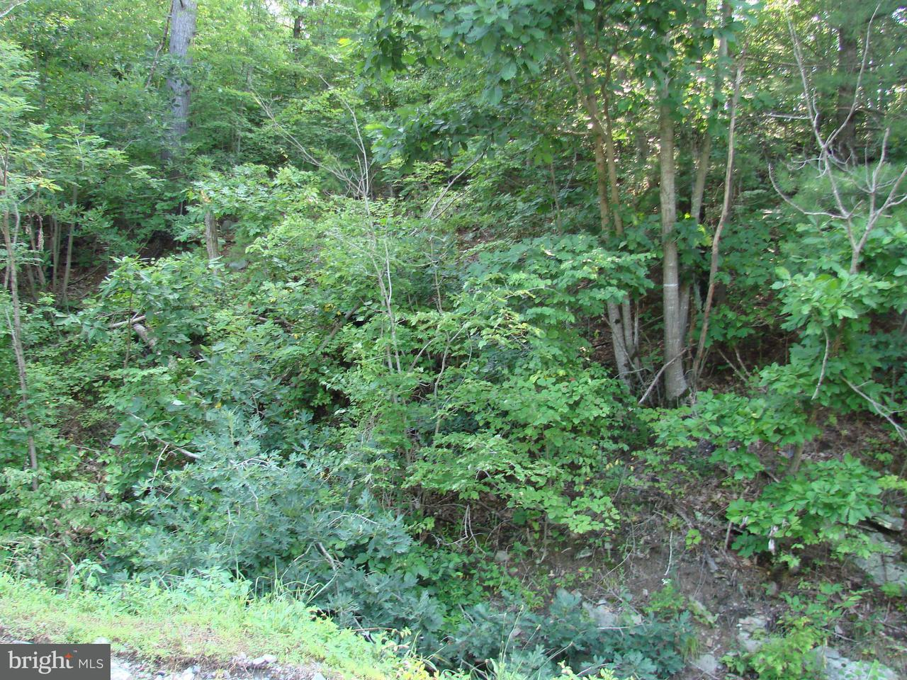 Land for Sale at Dovel Hollow Rd. Stanley, Virginia 22851 United States