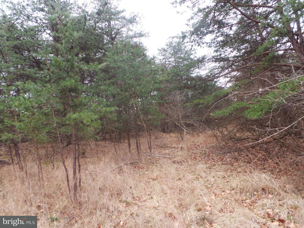 Land for Sale at 1 Timber Ridge Rd Berkeley Springs, West Virginia 25411 United States