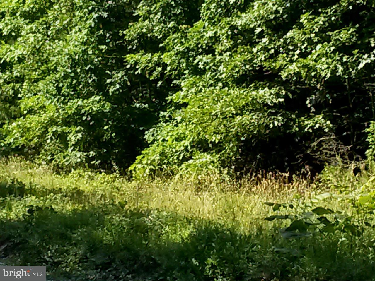 Additional photo for property listing at 8216 Shirley Rd  Unionville, Virginia 22567 United States